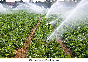 Agriculture water spray - Water spray on an agricultural...