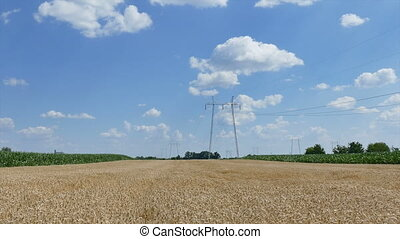 Agriculture, wheat field