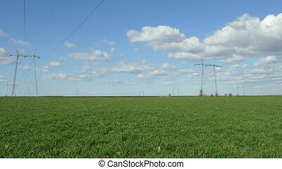 Agriculture, wheat field in spring