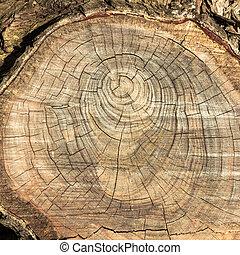 agrietado, viejo, textura de madera, con, círculos
