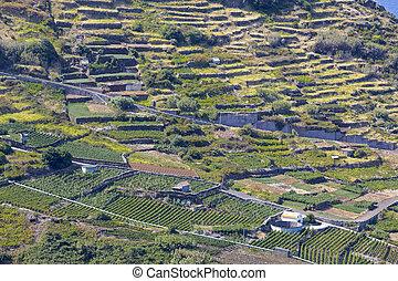 Agrigulture on Madeira (Portugal) island