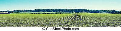 agronomiskt felt, hos, mængder, på, en, række