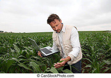 Agronomist analysing cereals with laptop computer