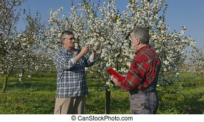 Agronomist and farmer in cherry orchard