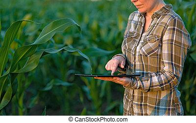 agronomist, com, tabuleta, computador, em, campo milho