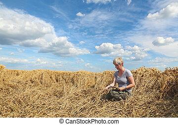 agronomist, endommagé, blé, inspecter, champ, paysan, ou