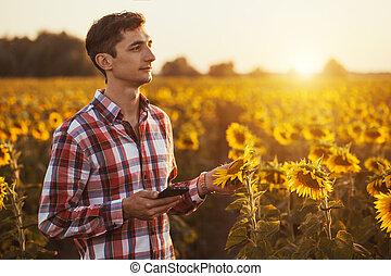 agronomist, használ, egy, tabletta, helyett, olvas, egy, jelent, képben látható, egy, napraforgó, mezőgazdaság terep