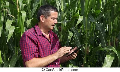 Agronomist inspect corn field - Agronomist with electronic ...
