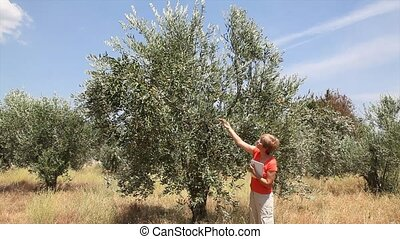 Agronomist inspect olive tree - Female agricultural expert...