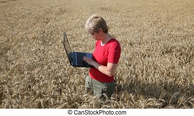 Agronomist inspect wheat use laptop