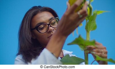 Agronomist inspecting sunflower plant in farm field - ...