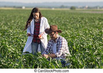 agronomist, kukurydziane pole, rolnik
