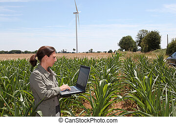 agronomist, kukurydziane pole