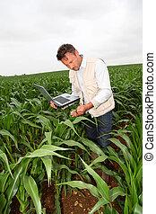 agronomist, laptop komputer, kasza, analizując