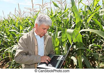 agronomist, laptop komputer, kukurydziane pole
