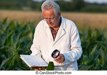 agronomist, nagniotek, człowiek, stary, pole