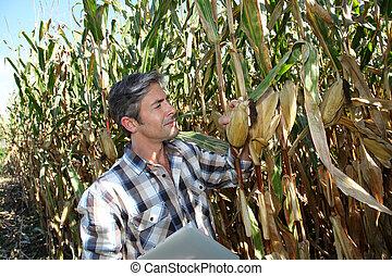 agronomist, nagniotek, elektronowy, tabliczka, pole