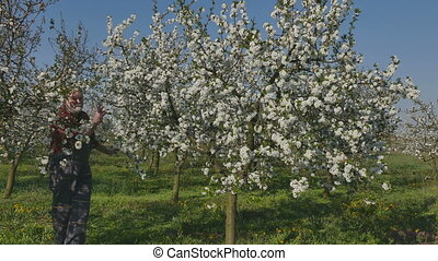 Agronomist or farmer in cherry orchard - Agronomist or...