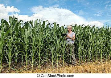 agronomist, rolnictwo, kukurydziane pole, rolnik, albo