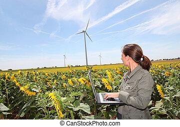 agronomist, słoneczniki, pole
