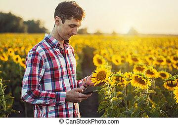 agronomist, usando, um, tabuleta, para, ler, um, relatório, ligado, um, girassol, campo agricultura