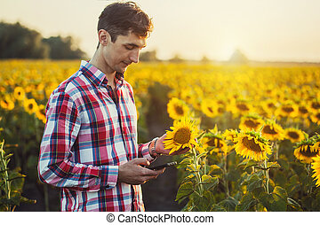 Agronomist Using a Tablet for read a report on a sunflower agriculture field