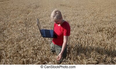 Agronomy expert examine wheat - Agricultural expert...