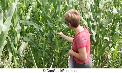 Agronomy - Agricultural expert inspecting quality of corn in...
