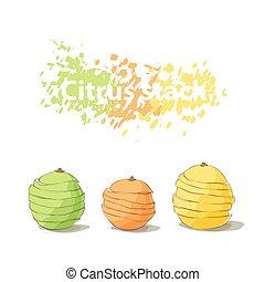 agrume, affettato, pila, frutte