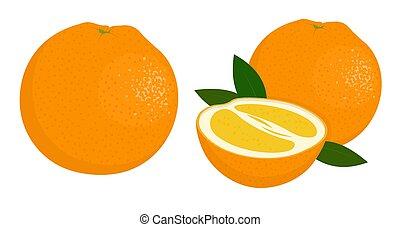 agrume, fruit., illustrazione, orange., fondo., vettore, arance, mezzo, arancia, bianco, intero