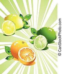 agrume, fruit., set, vettore