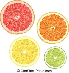 agrume, fruits., set, vettore