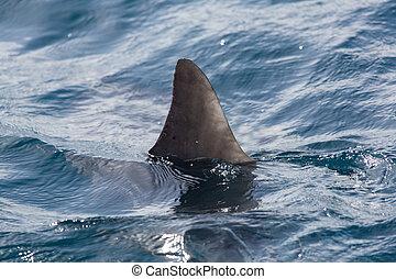 agua, aleta del tiburón, sobre