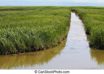 agua, cañas, canal, bambú, midst, caña, inmenso