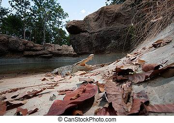 agua, cocodrilo, tierra, fresco