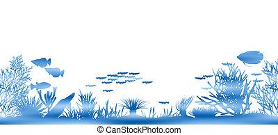 agua, coral