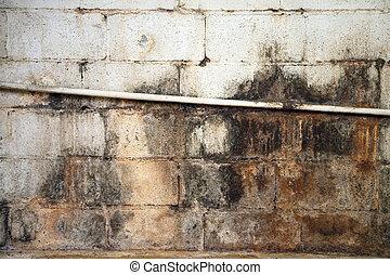 agua, dañado, y, mohoso, sótano, pared