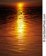agua, dorado, 1