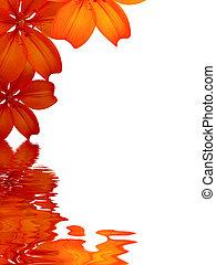 agua, flores, reflejar, plano de fondo