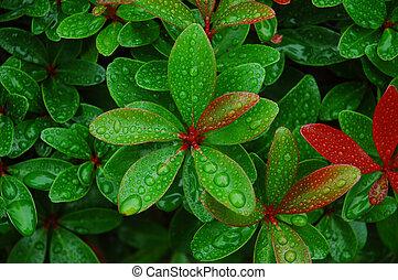 agua, gotitas, hojas, fresco