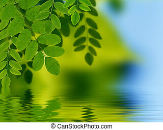 agua, hojas, reflejar