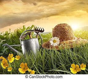 agua, lata, y, sombrero de paja, colocar, en, campo, de, maíz