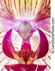 agua, perls, orquídea