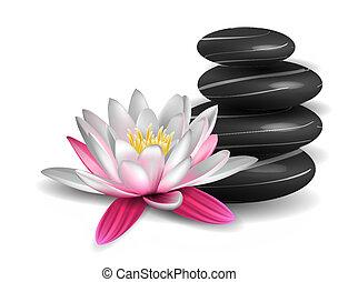 agua, piedras, lirio, zen