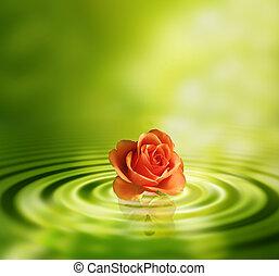 agua, rosa