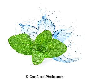 agua, salpicadura, menta, leafs