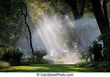 agua, sprau, amd, luz, en, parque público