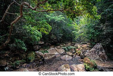 agua, summer., río, rainforest, tropical, roca, sin