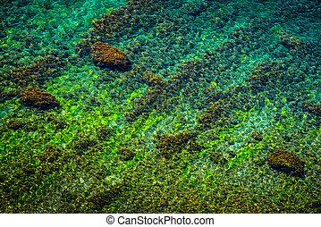 agua, superficial, nearshore