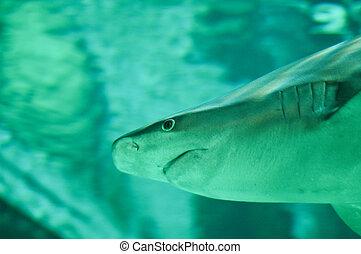 agua, tiburón, profundo, natación